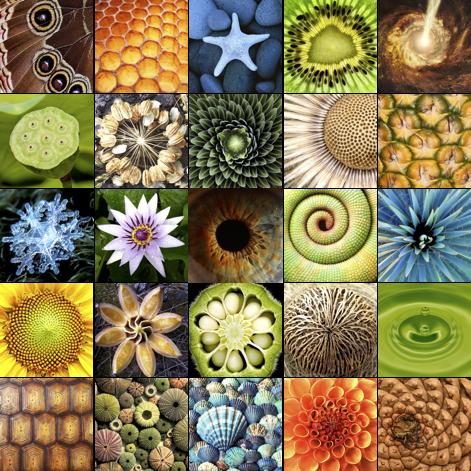 Beauté et harmonie de la vie représentées dans le monde de la nature