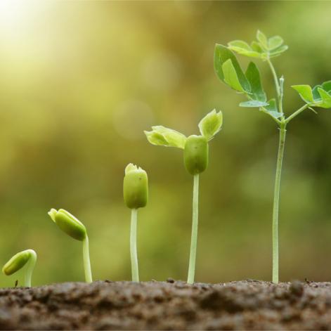 La croissance de la nature : témoin des processus d'éveil de la conscience humaine