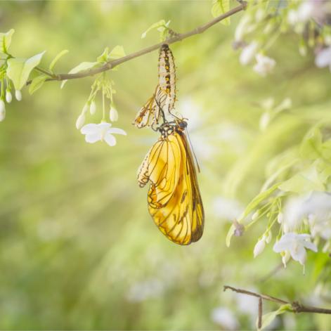Le bien-être : un bien renaitre à soi à travers la transformation intérieure