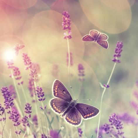 Entre nous : le Coaching de vie - un processus de transformation tel la chenille en papillon